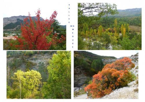 composition 4 photos